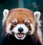 Panda_Grou