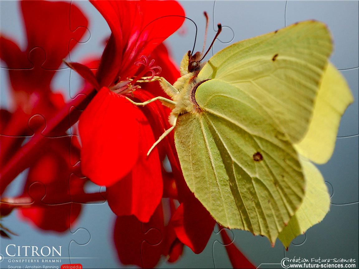 citron-1152_01.jpg